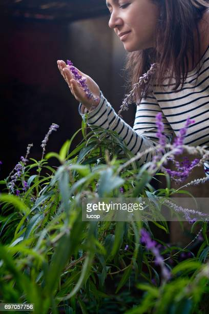 Woman picking sage flowers from the garden. Hand touching flower. Woman looking a flower.