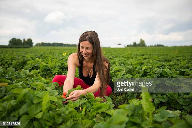 Woman picking strawberries in field
