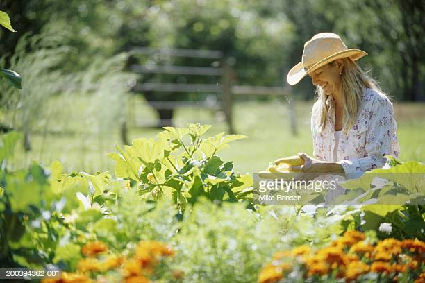Woman picking summer squash in garden