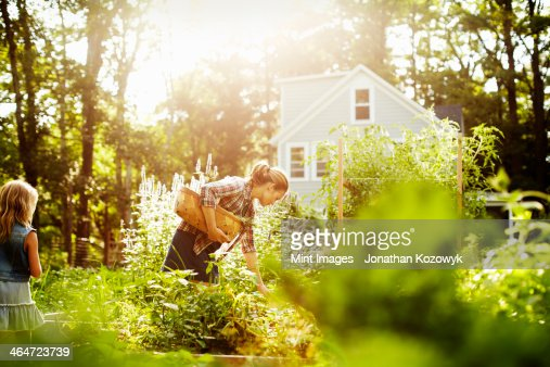 A woman picking vegetables in a garden at the end of the day. A child walking through tall plants.