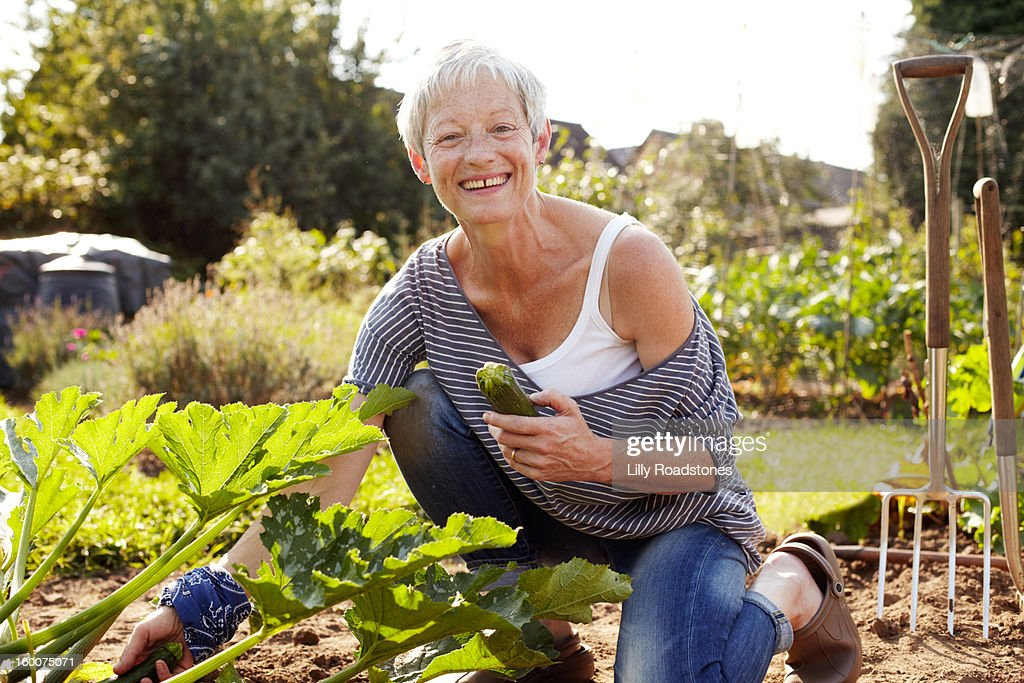 Woman picking vegetables on allotment : Stock Photo