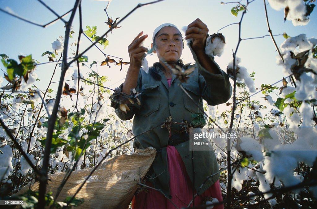 Woman Picks Cotton in Nicaragua