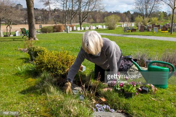 Woman planting flowers in cemetery