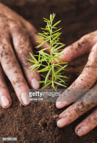 Woman planting sapling