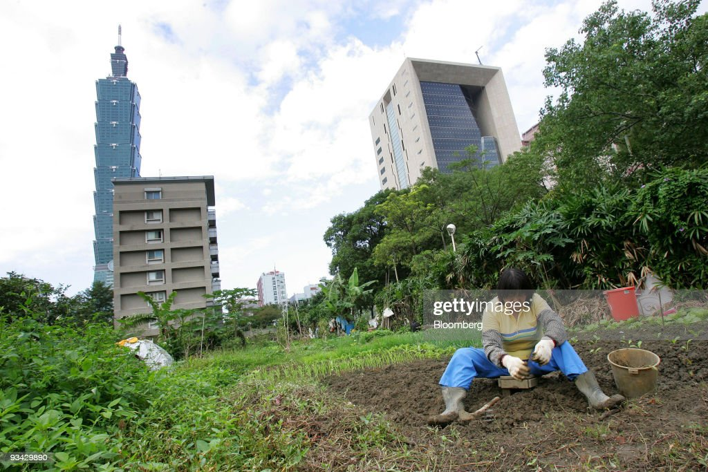 A woman plants vegetables in a business district in Taipei Taiwan on Thursday Nov 26 2009 Taiwan's economy contracted at the slowest pace in a year...