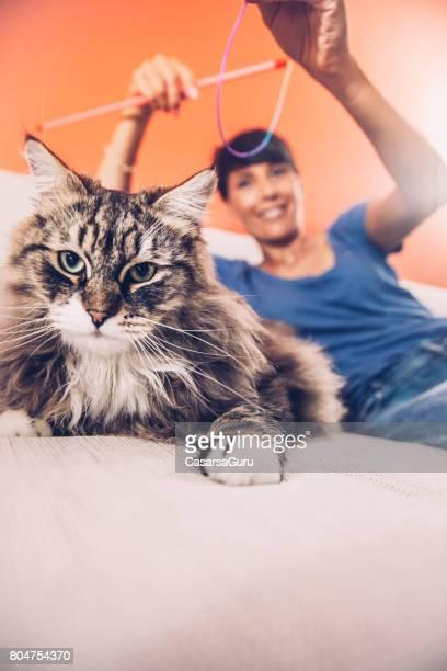 Frau spielt mit ihre süße flauschige Katze