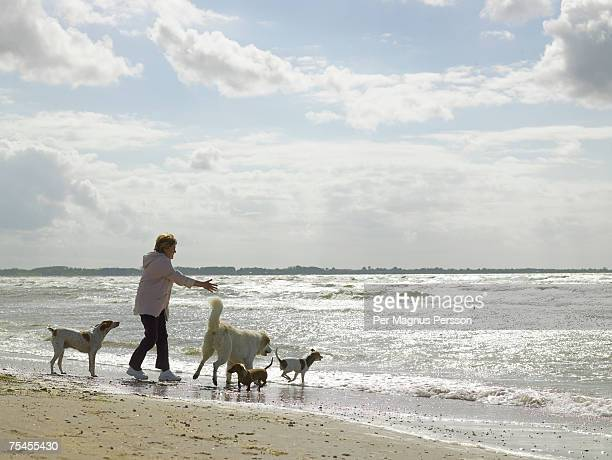 A woman playing with her four dogs on a sunny beach.
