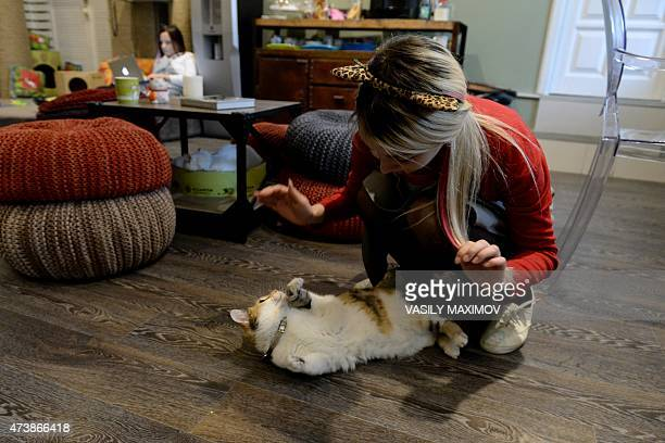 A woman plays with a cat at Moscow's Cats and People cat cafe on May 18 2015 Cat cafes allow customers who cannot have a pet at home to enjoy a cup...