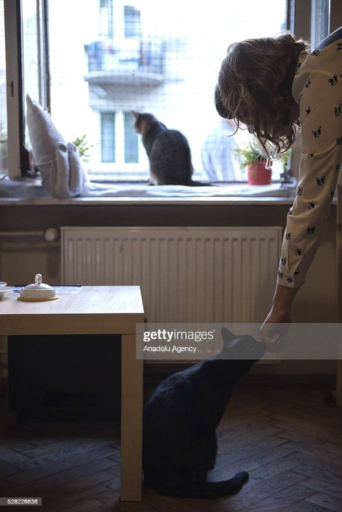 A woman plays with a dark cat at the Cat Caffee, Krowoderska 48, Krakow, Poland on May 4, 2016. The Cat Coffee is an attraction for the cat lovers and it is open since the end of June 2015 and has six cats. Two of the cats came from the ' Kocia Academia' fondation and the other four cats were or found on the street.