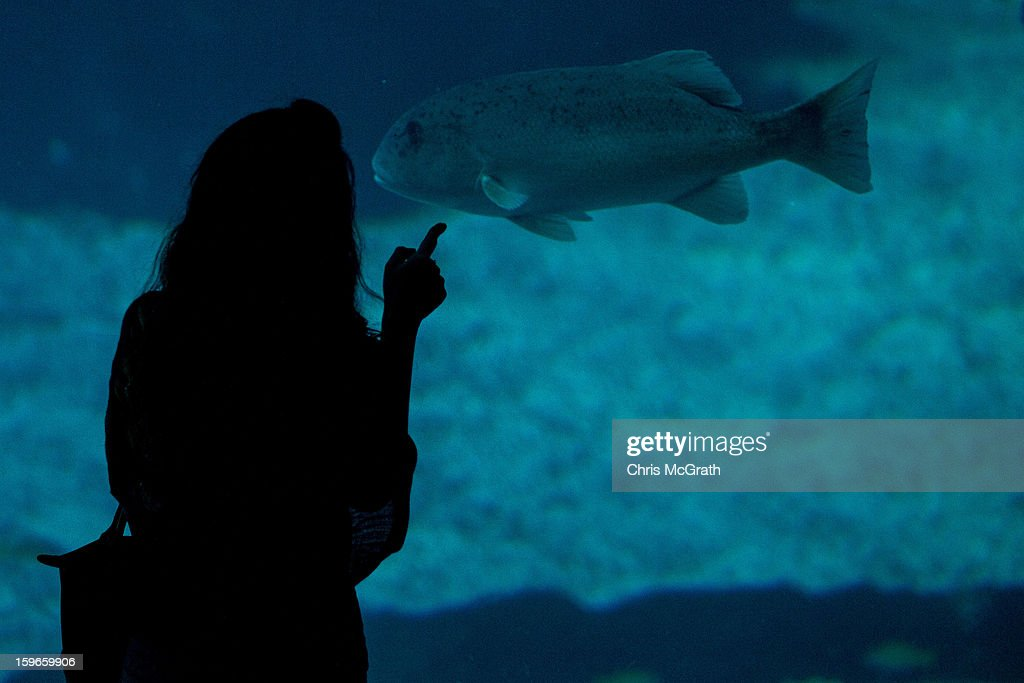 A woman points at a fish on display at Resort World Sentosa's Marine Life Park, January 18, 2013 in Singapore. The Marina Life Park is Resort World Sentosa's newest attraction and is the world's largest aquarium, with 100,000 marine animals of over 800 species housed in 45 million litres of water.