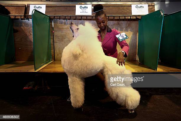 A woman poses for a photograph with her Standard Poodle on the third day of Crufts dog show at the National Exhibition Centre on March 7 2015 in...