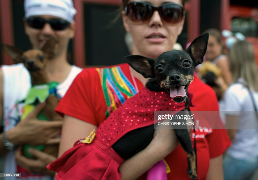 A woman poses with her fancy dressed dog during the animals' carnival, in Copacabana beach in Rio de Janeiro on February 03, 2013. AFP PHOTO / CHRISTOPHE SIMON