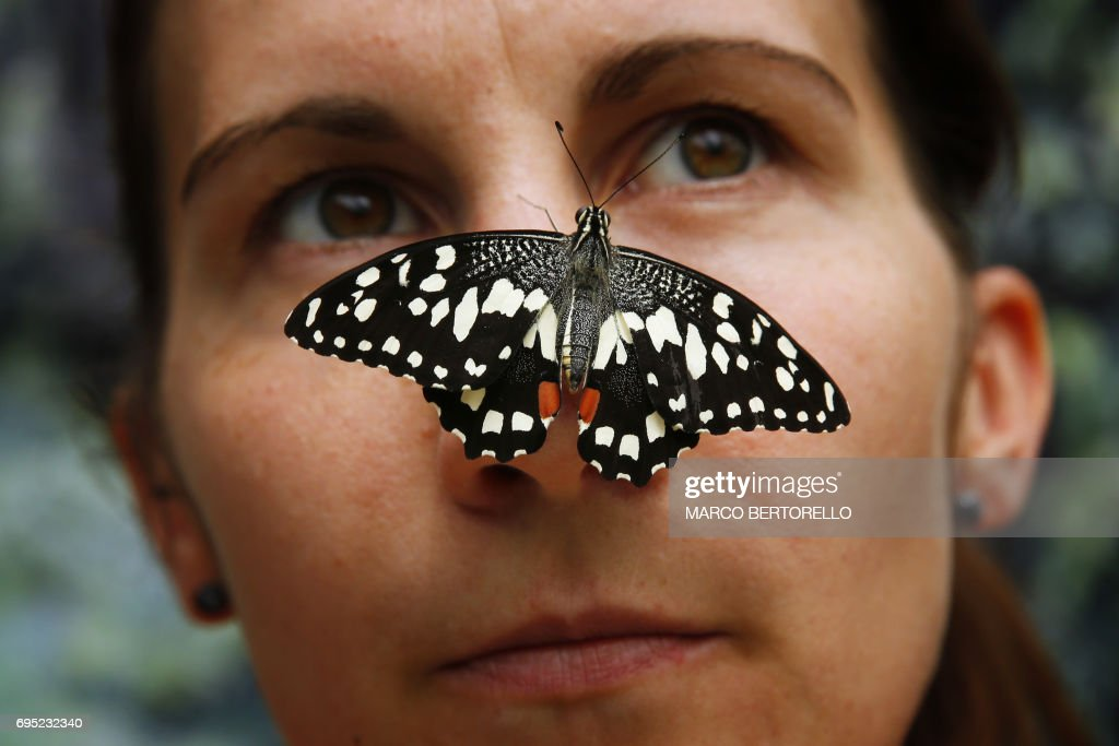 A woman poses with tropical butterfly in the 'Casa delle Farfalle', the largest complex of tropical greenhouses in Italy on June 12, 2017 in Bordano, near Udine, northeastern Italy. / AFP PHOTO / Marco BERTORELLO