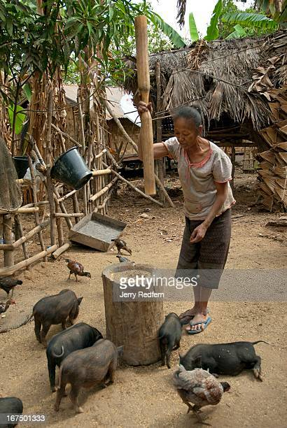 A woman pounds rice in an old wooden mortar and pestle as pigs and chickens jockey for bits of rice that fly out This village is scheduled to be...