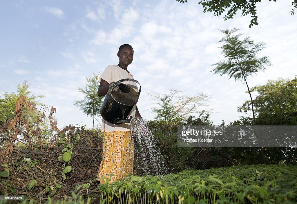 A woman pours water in a tree nursery on August 17, 2012, in Moro, Kenya. The tree nursery belongs to the Moro Self Help Group, a development aid project that is intended to help people increase their income.