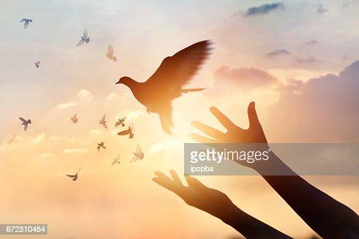 Woman praying and free bird enjoying nature on sunset background, hope concept : Stock Photo