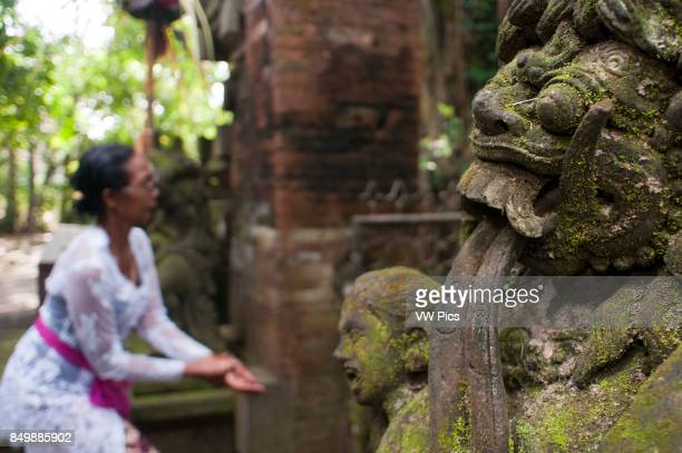 Woman praying and giving offers Longtailed macaques in Sacred Monkey Forest Ubud Indonesia Monkey at Dalem Agung Padangtegal temple in Sacred Monkey...