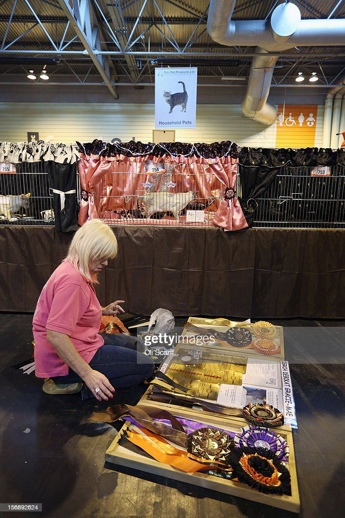 A woman prepares a board of her cat's awards and rosettes at the Governing Council of the Cat Fancy's 'Supreme Championship Cat Show' held in the NEC on November 24, 2012 in Birmingham, England. The one-day Supreme Cat Show is one of the largest cat fancy competitions in Europe with over one thousand cats being exhibited. Exhibitors aim to have their cat named as the show's 'Supreme Exhibit' from the winners of the individual categories of: Persian, Semi-Longhair, British, Foreign, Burmese, Oriental, Siamese.