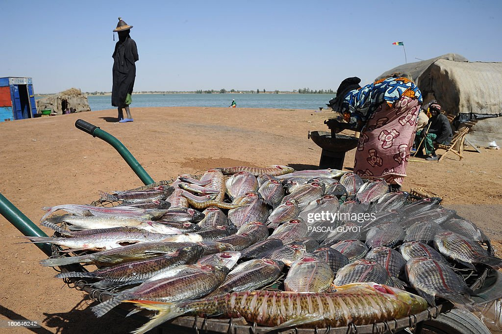 A woman prepares fresh-caught fishes on the bank of the Niger river, near Timbuktu, on February 4, 2013. French fighter jets pounded Islamist supply bases in northern Mali to flush the insurgents out of hiding as Paris pushed on February 4, 2013 for African troops to quickly take over the offensive. Dozens of French warplanes carried out massive air strikes on rebel training and logistics centres in the area around their last stronghold of Kidal over the weekend in the mountainous northeast of the landlocked county.