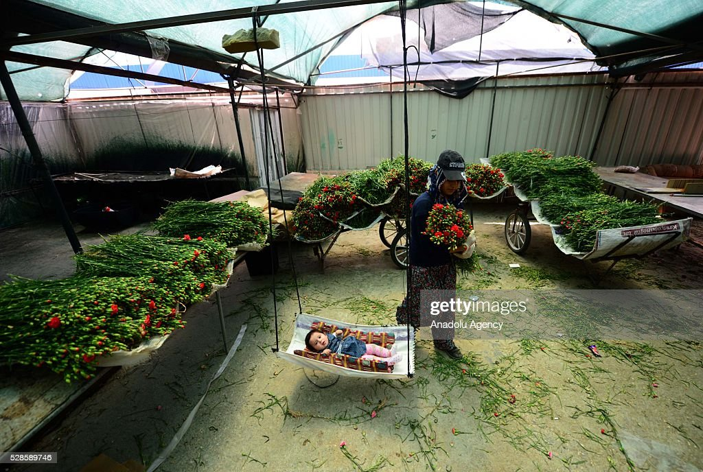 A woman prepares the flowers for Mother's Day and her baby sleeps in a hammock at a greenhouse in Antalya, Turkey on May 6, 2016.