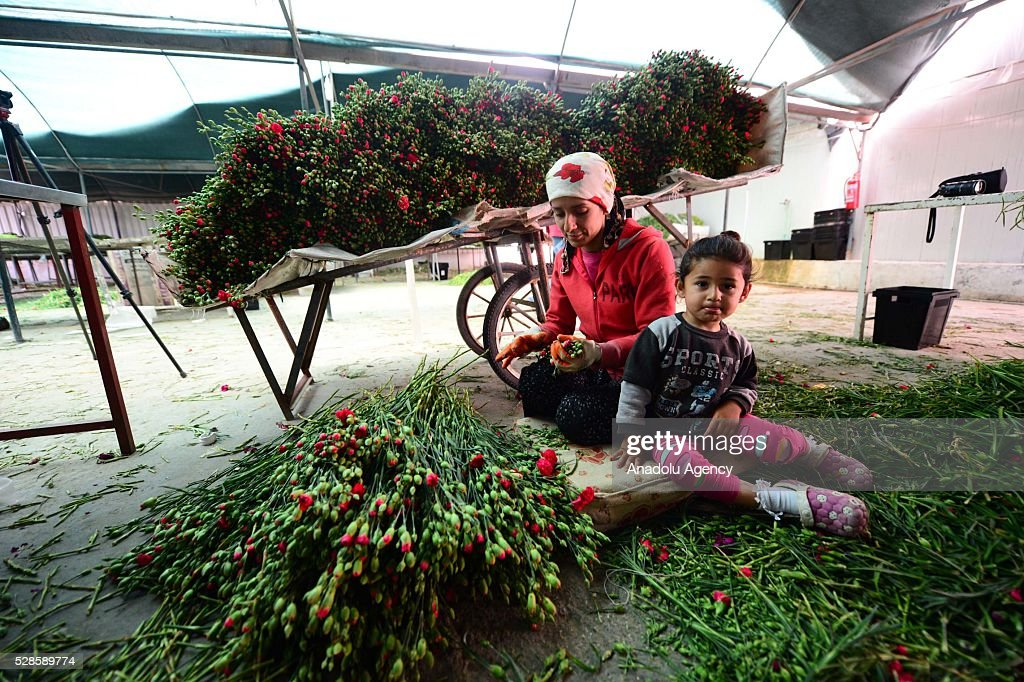 A woman prepares the flowers for Mother's Day and her daughter sits next to her at a greenhouse in Antalya, Turkey on May 6, 2016.