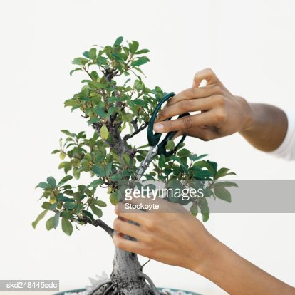 Woman pruning a bonsai tree