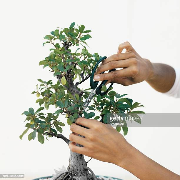 Woman pruning a bonsai tree