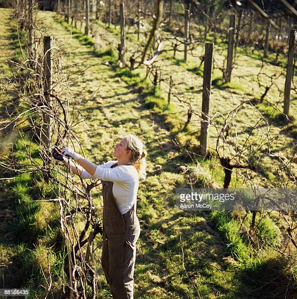 Woman pruning grapevines