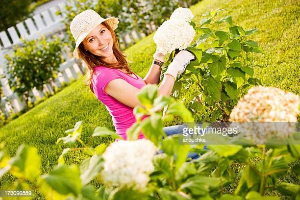 Woman pruning hydrangea plant in garden