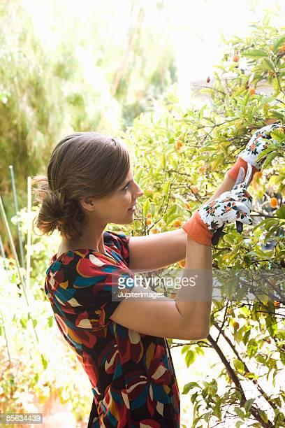 Woman pruning tree