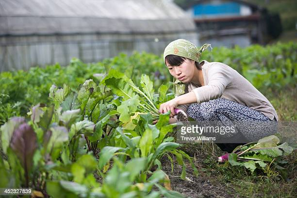 A woman pulling vegetables in her garden