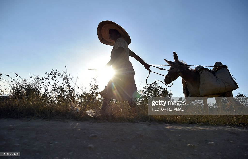 A woman pulls a donkey on the National Route 3 the Central Plate of Haiti 135 km from PortauPrince on March 17 2016 / AFP / HECTOR RETAMAL