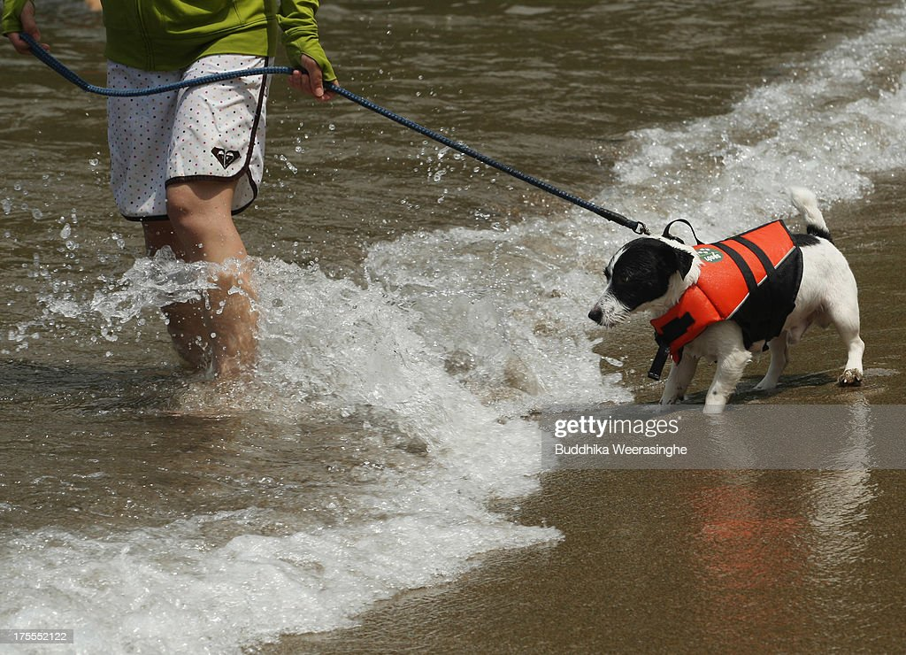 A woman pulls her pet dog in the water for bath at Takeno Beach on August 4, 2013 in Toyooka, Japan. This beach is open for dogs and their owners every summer between the months of June and September. .