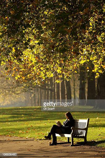 A woman reads a book beneath trees with Autumn leaves in Hyde Park on November 16 2010 in London England Strong winds and gales throughout the UK has...