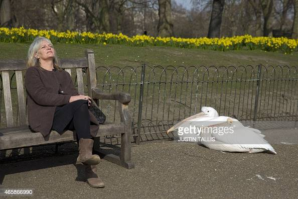 A woman relaxes on a bench next to pelicans basking in the sunshine on a spring day in Saint James Park in central London on March 11 2015 AFP PHOTO...