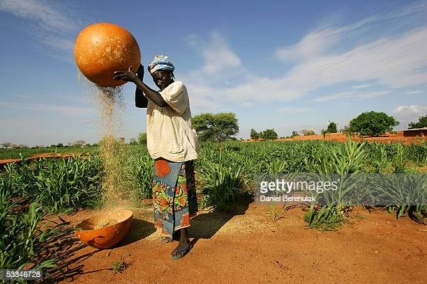 A woman removes the husks from grains of millet in the village of Sadongori Kolita August 9 2005 near Maradi Nigeria The current crop is due in six...