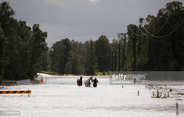 A woman rescues her horses from flood waters on April 22 2015 near Dungog Australia Three people have died and more than 200000 are still without...
