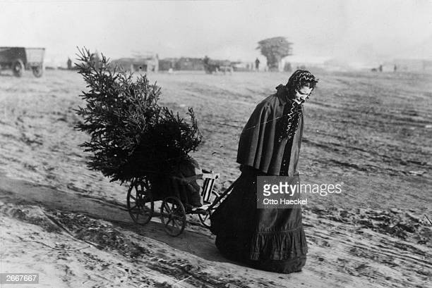 A woman returns home from the market with a Christmas tree