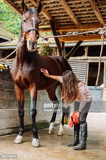 Woman rider brushing and cleaning her horse