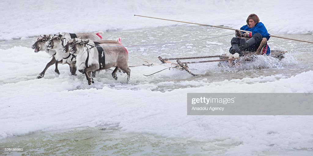 A woman rides reindeers' sled in melting snow at the north of Yamal Gyda, the northernmost settlement of the Yamalo-Nenets Autonomous Okrug in Russia on April 27, 2016. Effects of global warming are seen more clearly every year as north gets warmer and spring comes sooner. This situation makes residents and reindeer harders' life very difficult.