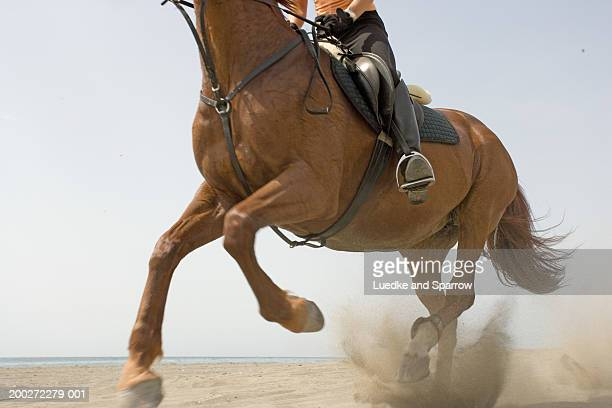 Woman riding horse on beach, low section
