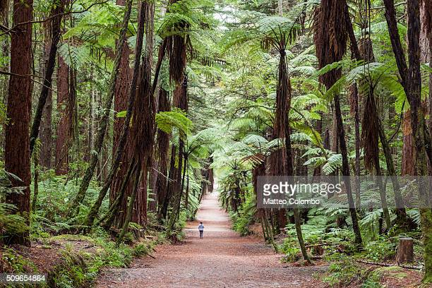 Woman running in the Redwood forest, Rotorua, New Zealand
