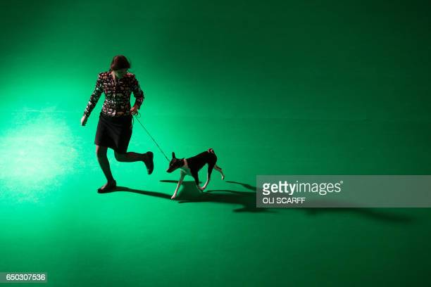A woman runs with a Basenji dog on the first day of the Crufts dog show at the National Exhibition Centre in Birmingham central England on March 9...