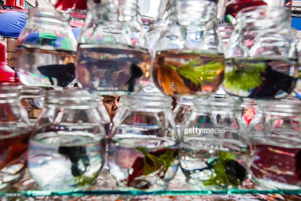 A woman, seen through glass jars, looks at pet fish for sale at the Divisoria market in Manila, the Philippines, on Tuesday, Jan. 22, 2013. Philippine government bonds advanced on speculation the central bank will hold its benchmark interest rate at a record low at a meeting tomorrow, supporting demand for the nation's debt. Photographer: Julian Abram Wainwright/Bloomberg via Getty Images