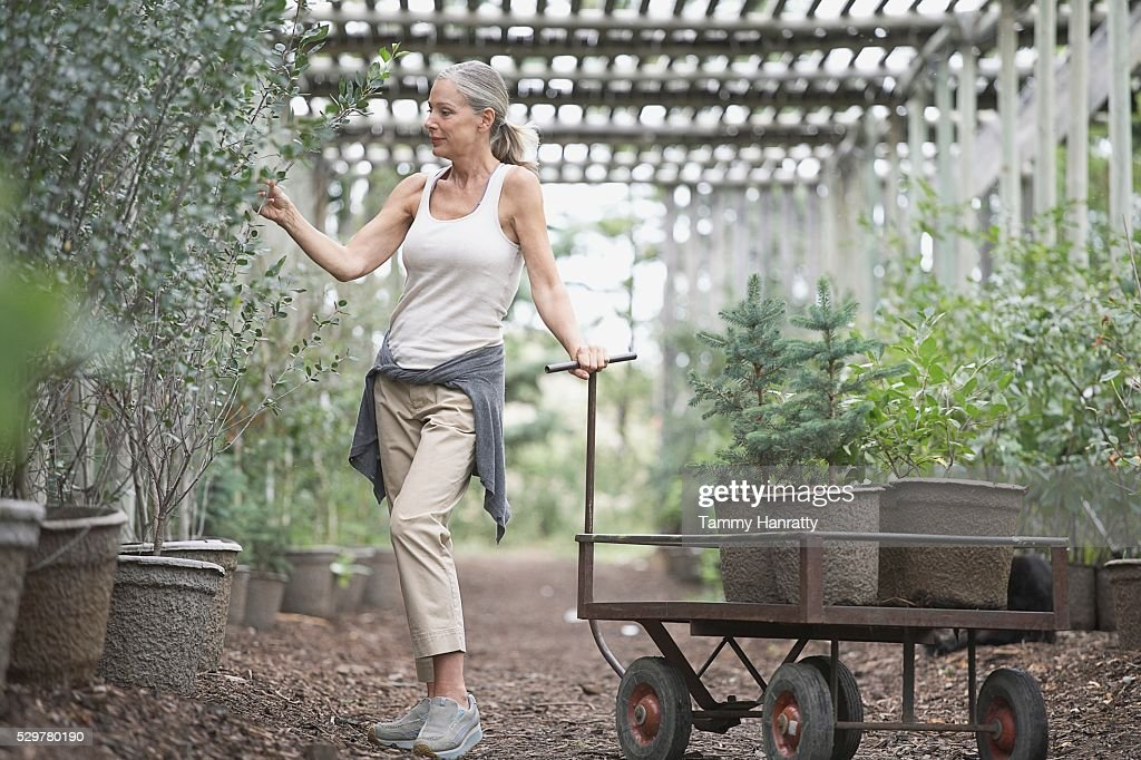 Woman selecting plants at garden center : Stock-Foto
