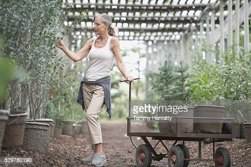 Woman selecting plants at garden center : Stock Photo