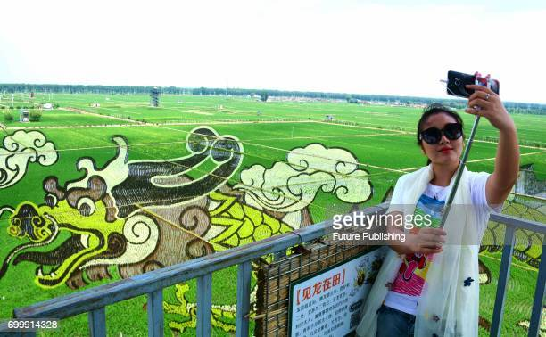 A woman selfies with an image created by different kinds of rice in a paddy for spectating in a farmingtourism attraction in Shenyang in northeast...