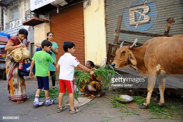Woman selling food for sacred cows in Mumbai Woman selling grass to people that they can give to the cows which are sacred in India on April 14 2010...
