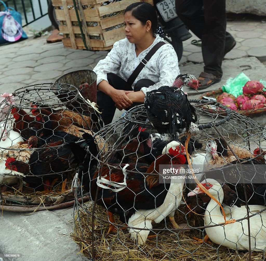 A woman sells live chickens and ducks in downtown Hanoi on May 8, 2013. Live poultry markets can act as hotbeds for H5N1 bird flu, but simple measures such as disinfecting trucks, equipment and market space could help stop the virus from spreading, according to researchers. A team of French, British and Vietnamese researchers interviewed vendors at live bird markets in northern Vietnam and tracked how outbreaks could move as if via social network, even into remote areas. AFP PHOTO/HOANG DINH Nam