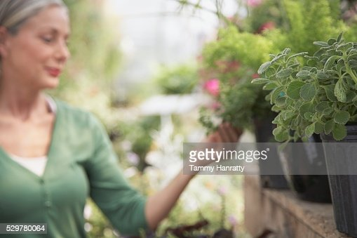 Woman shopping at garden center : Foto stock